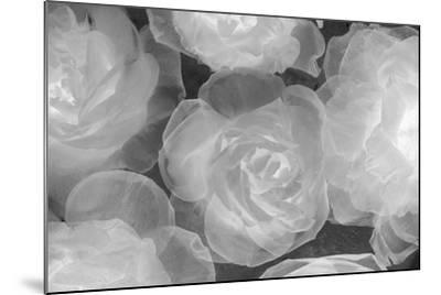 Rosas Blancas-Moises Levy-Mounted Photographic Print
