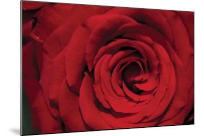 Red Rose Detail-Erin Berzel-Mounted Photographic Print