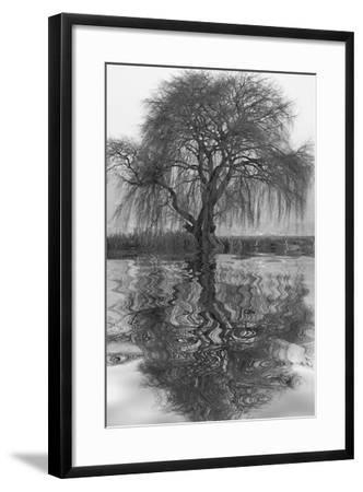Sauce en Agua 1-Moises Levy-Framed Photographic Print