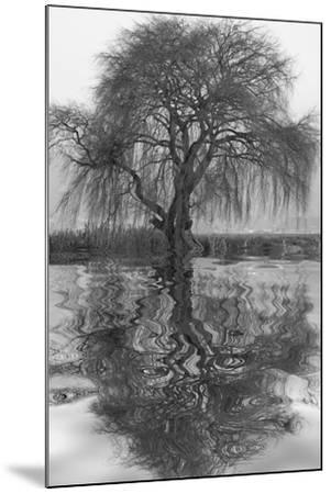 Sauce en Agua 1-Moises Levy-Mounted Photographic Print