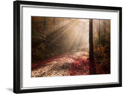 Light in the Forest-Michael Blanchette-Framed Photographic Print
