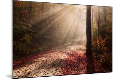 Light in the Forest-Michael Blanchette-Mounted Photographic Print