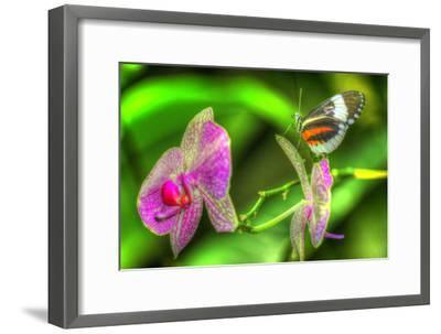 Butterfly 7-Robert Goldwitz-Framed Photographic Print
