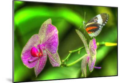 Butterfly 7-Robert Goldwitz-Mounted Photographic Print