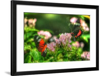 Butterfly 11-Robert Goldwitz-Framed Photographic Print