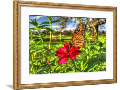 Butterfly 15-Robert Goldwitz-Framed Photographic Print