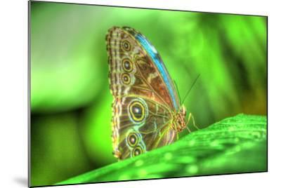 Butterfly 9-Robert Goldwitz-Mounted Photographic Print