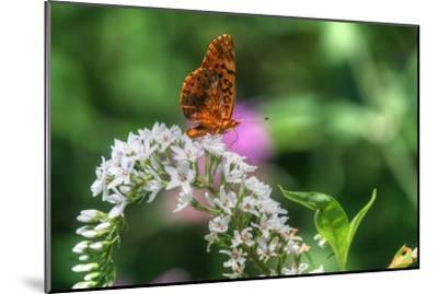 Butterfly 12-Robert Goldwitz-Mounted Photographic Print