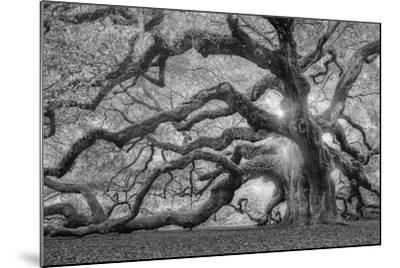 Tree of Light BW FL-Moises Levy-Mounted Photographic Print