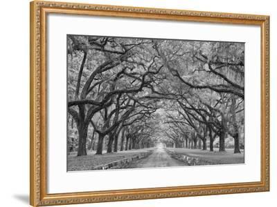 Oaks Avenue 1 BW-Moises Levy-Framed Photographic Print