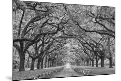 Oaks Avenue 1 BW-Moises Levy-Mounted Photographic Print