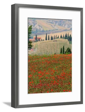 Tuscan Vertical Poppies-Robert Goldwitz-Framed Photographic Print