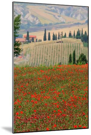 Tuscan Vertical Poppies-Robert Goldwitz-Mounted Photographic Print