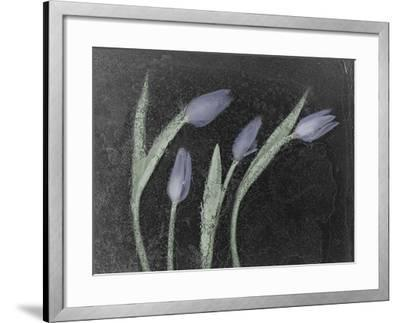 Tulipanes Azules-Moises Levy-Framed Photographic Print
