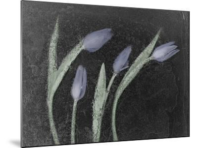Tulipanes Azules-Moises Levy-Mounted Photographic Print