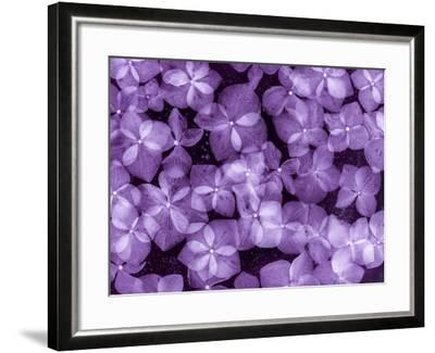 Flores Congeladas 200-Moises Levy-Framed Photographic Print