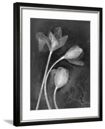 Tulipanes-Moises Levy-Framed Photographic Print
