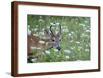 Young Buck-Robert Goldwitz-Framed Photographic Print