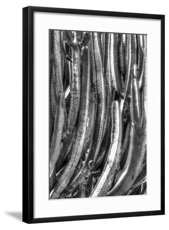 Old Cactus 4-Moises Levy-Framed Photographic Print