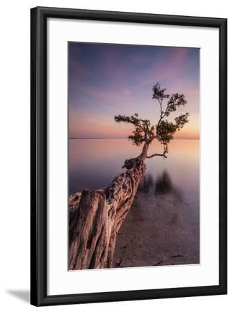 Water Tree IV-Moises Levy-Framed Photographic Print