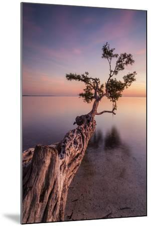 Water Tree IV-Moises Levy-Mounted Photographic Print