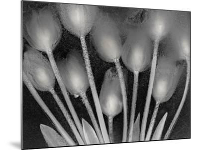 Ramo de Tulipanes-Moises Levy-Mounted Photographic Print