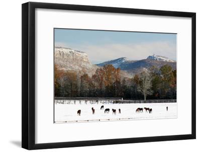 Early Snow Horse Paddock-Robert Goldwitz-Framed Photographic Print
