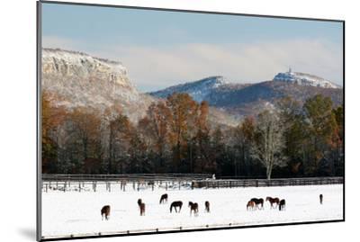 Early Snow Horse Paddock-Robert Goldwitz-Mounted Photographic Print