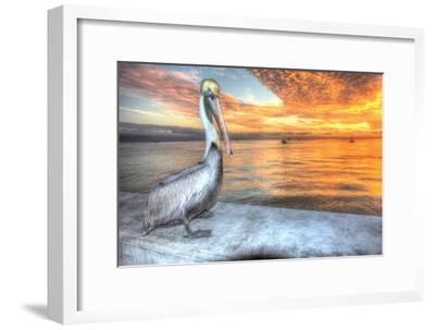 Pelican and Fire Sky-Robert Goldwitz-Framed Photographic Print
