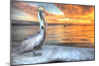 Pelican and Fire Sky-Robert Goldwitz-Mounted Photographic Print