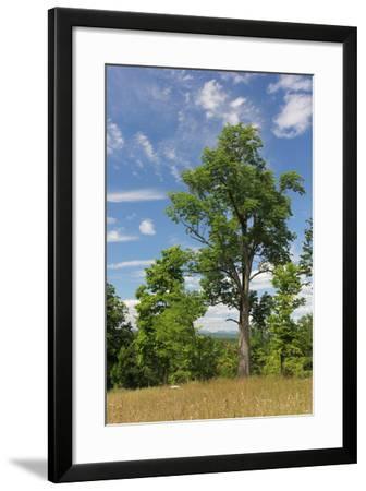 Distant Catskills Vertical 729-Robert Goldwitz-Framed Photographic Print