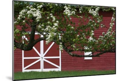 Spring Blossoms Red Barn-Robert Goldwitz-Mounted Photographic Print
