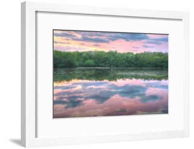 Heron and Mangroves-Robert Goldwitz-Framed Photographic Print