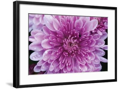 Purple Mum II-Erin Berzel-Framed Photographic Print