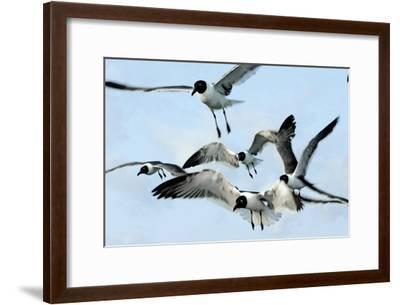Gulls 1-Alan Hausenflock-Framed Photographic Print