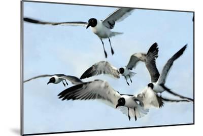 Gulls 1-Alan Hausenflock-Mounted Photographic Print