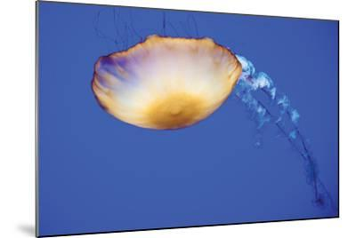Jellyfish V-Erin Berzel-Mounted Photographic Print