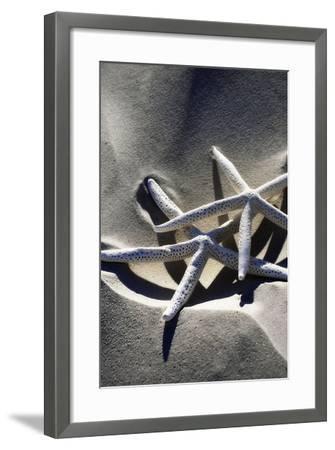 Sea Stars II-Alan Hausenflock-Framed Photographic Print