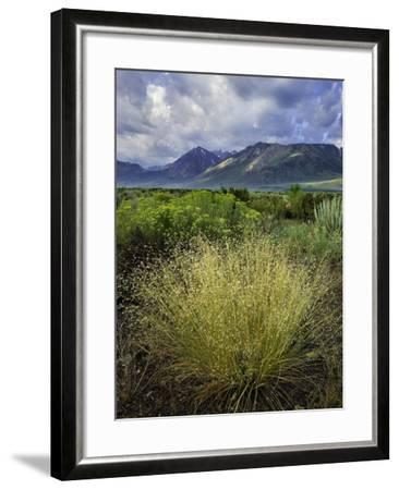 Eastern Sierra IV-Mark Geistweite-Framed Photographic Print