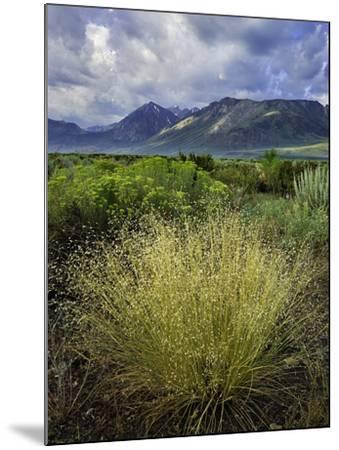 Eastern Sierra IV-Mark Geistweite-Mounted Photographic Print