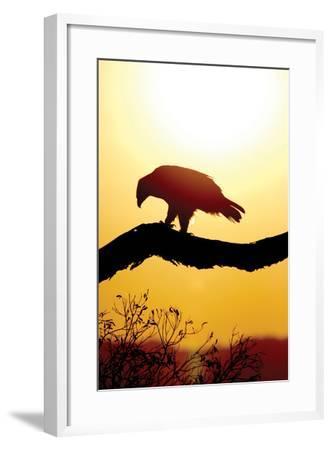Tawny Sunrise-Susann Parker-Framed Photographic Print