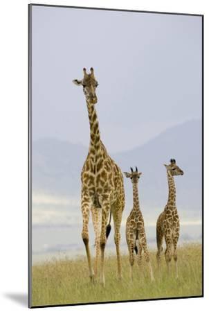 Savannah Strut-Susann Parker-Mounted Photographic Print