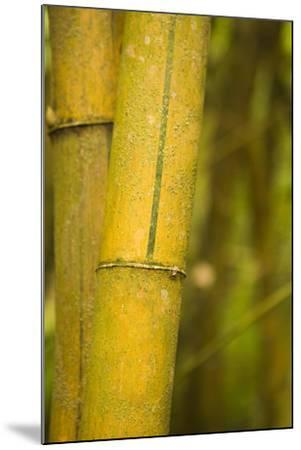 Bamboo I-Karyn Millet-Mounted Photographic Print