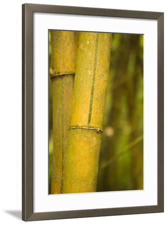 Bamboo I-Karyn Millet-Framed Photographic Print
