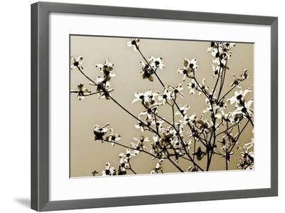 Dogwood IV-Alan Hausenflock-Framed Photographic Print