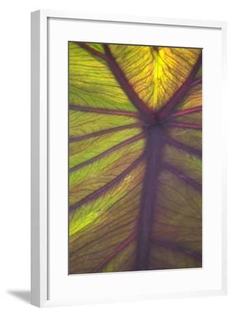 Sun in the Leaves I-Karyn Millet-Framed Photographic Print
