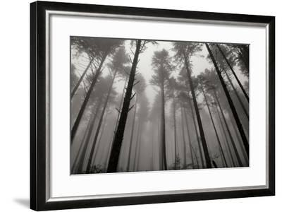 Redwoods II-Brian Moore-Framed Photographic Print