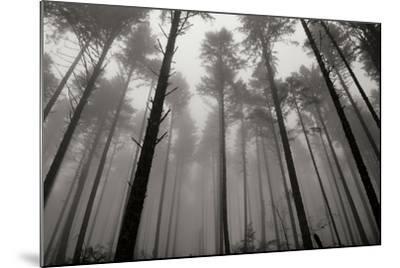Redwoods II-Brian Moore-Mounted Photographic Print
