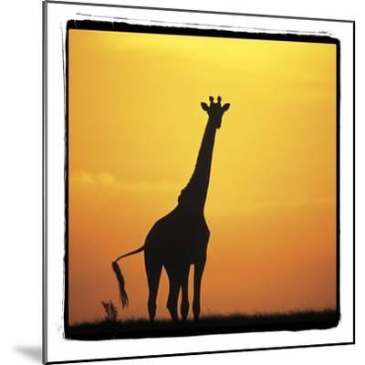 Radiant Africa 1-Susann Parker-Mounted Photographic Print