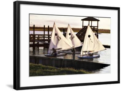 Three Sunfish II-Alan Hausenflock-Framed Photographic Print